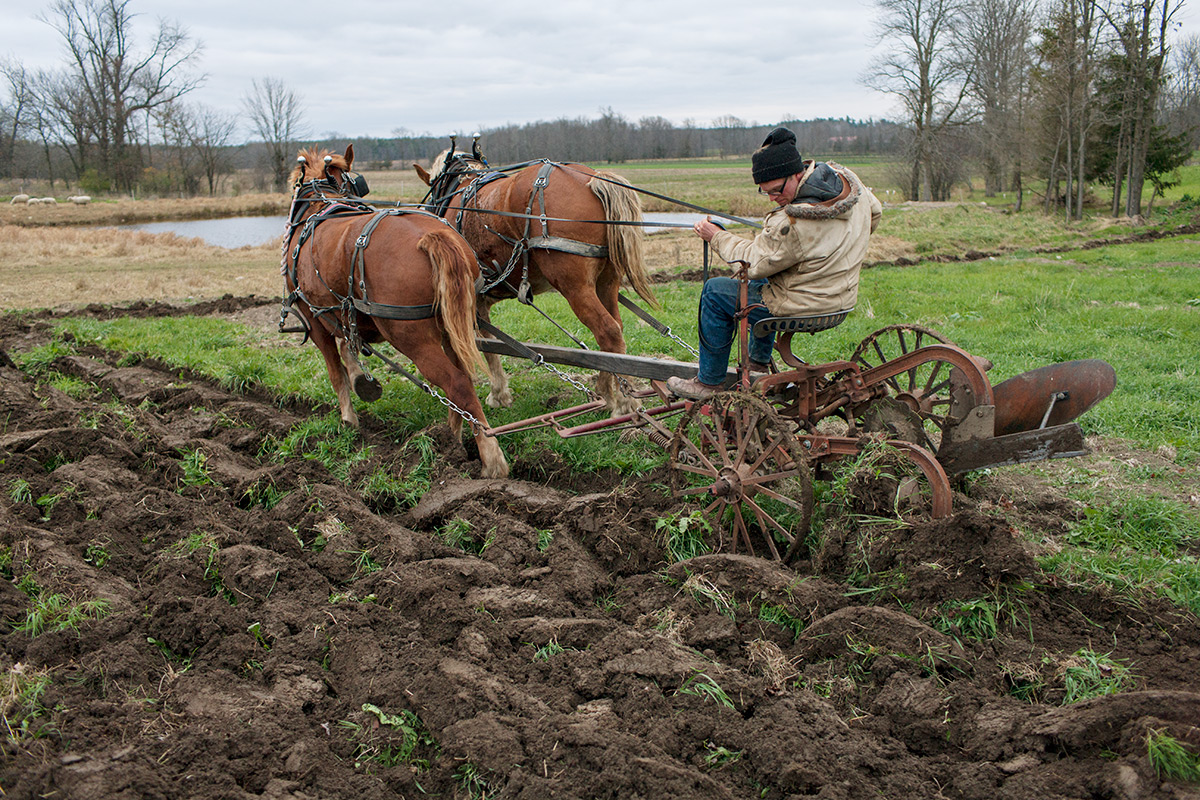 Mark, Cultivating with Horses. Essex Farm. Essex, NY.