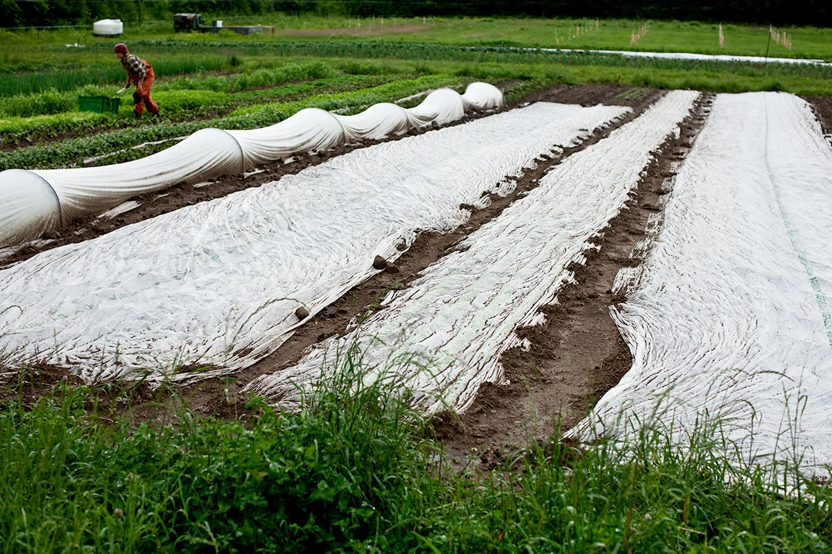 Row Covers. Fledging Crow Vegetables. Keeseville, NY.