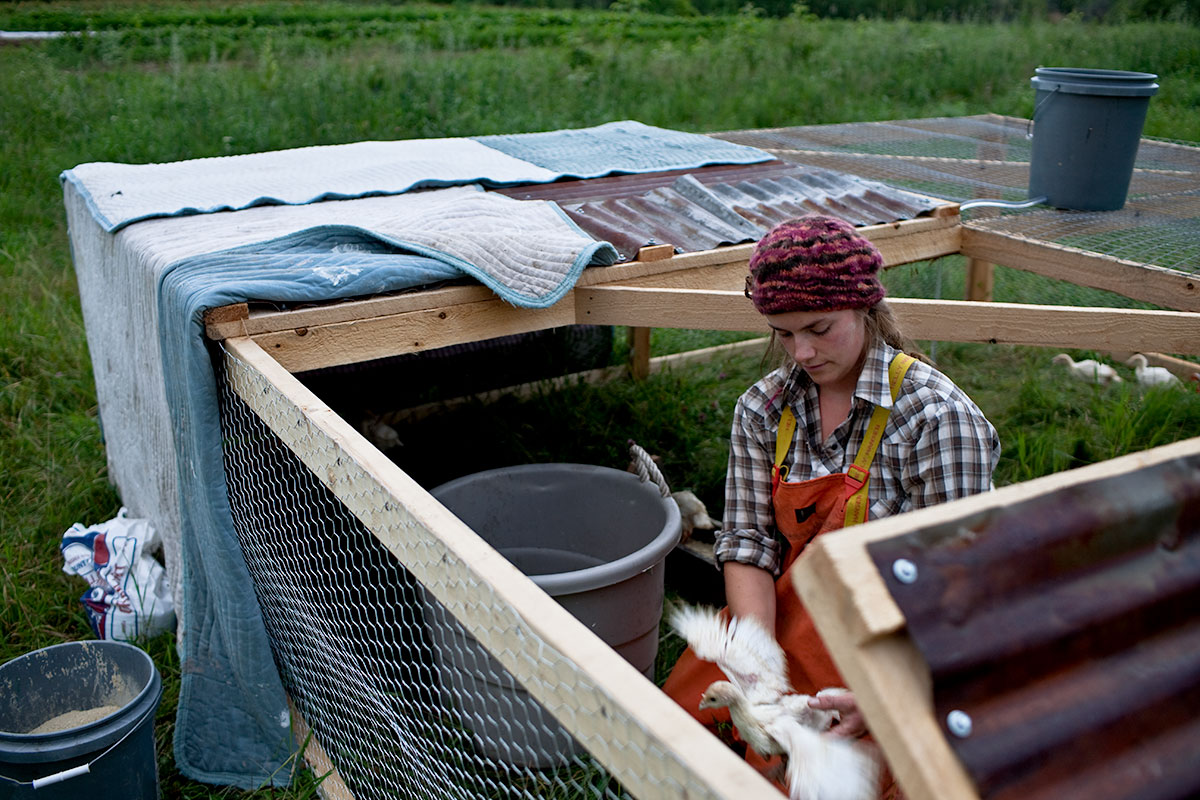 Paige, Tending Turkeys. Tomatoes. Fledging Crow Vegetables. Keeseville, NY.