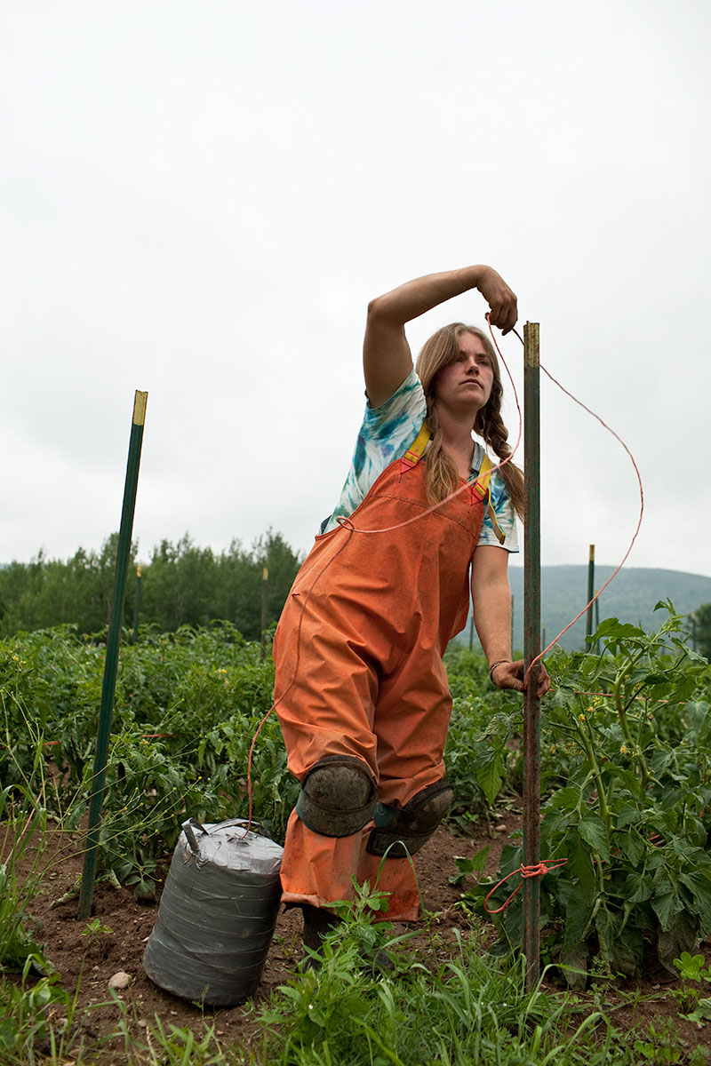 Paige, Trellising Tomatoes. Fledging Crow Vegetables. Keeseville, NY.